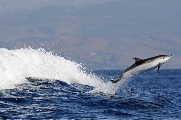 tipos de delfines 1