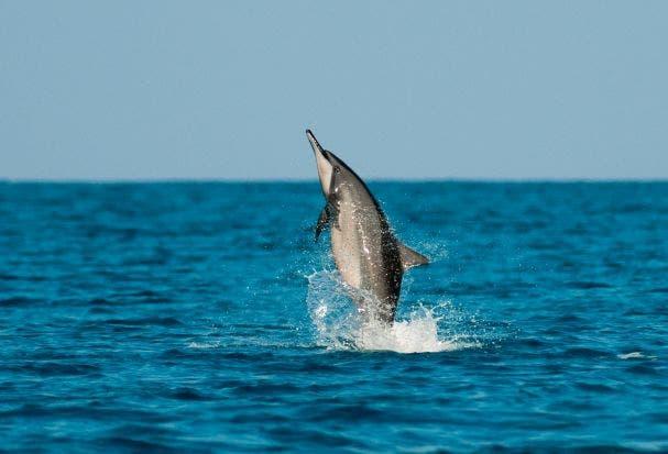 tipos de delfines 4