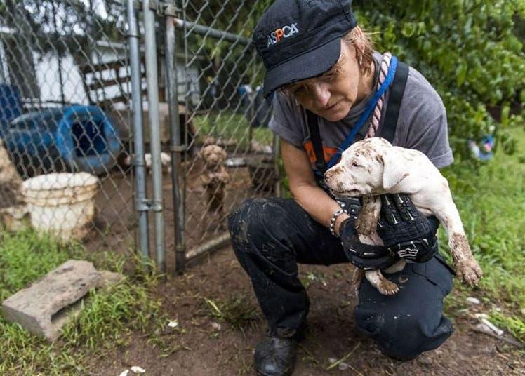 23 perros peleas rescatados 5