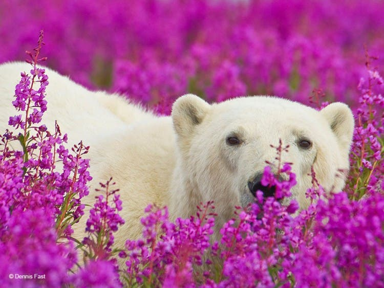 animales-oliendo-flores-16