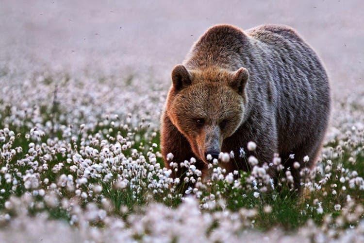 animales-oliendo-flores-30