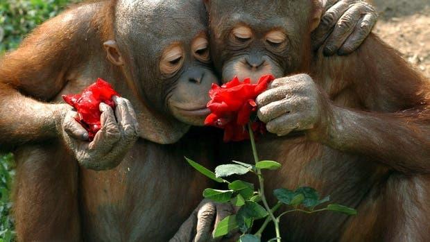 animales-oliendo-flores-4