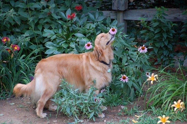 animales-oliendo-flores-6