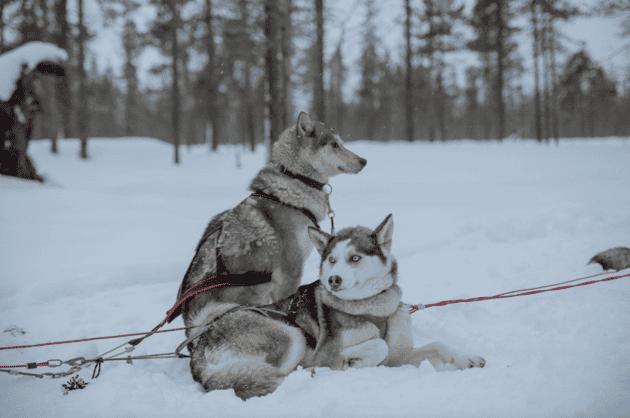 boda finlandia 22