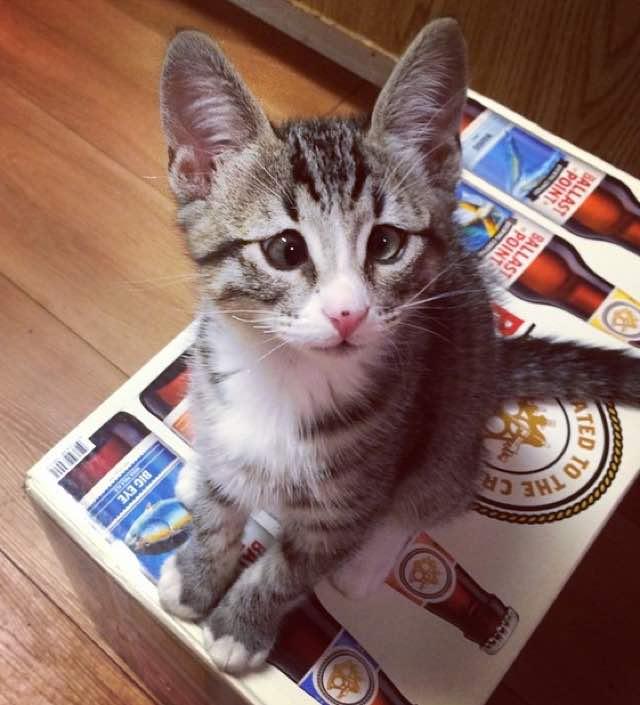 gatito bum 4