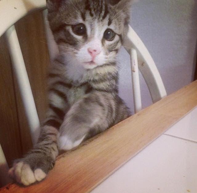 gatito bum 5
