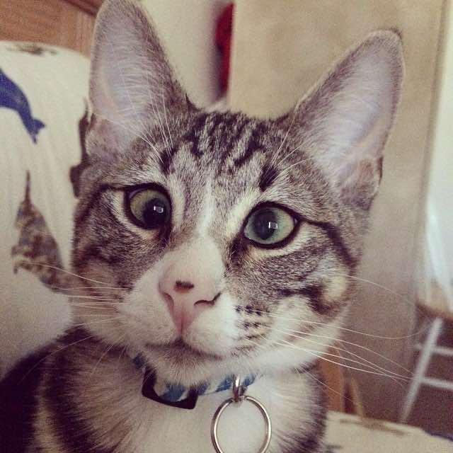 gatito bum 8