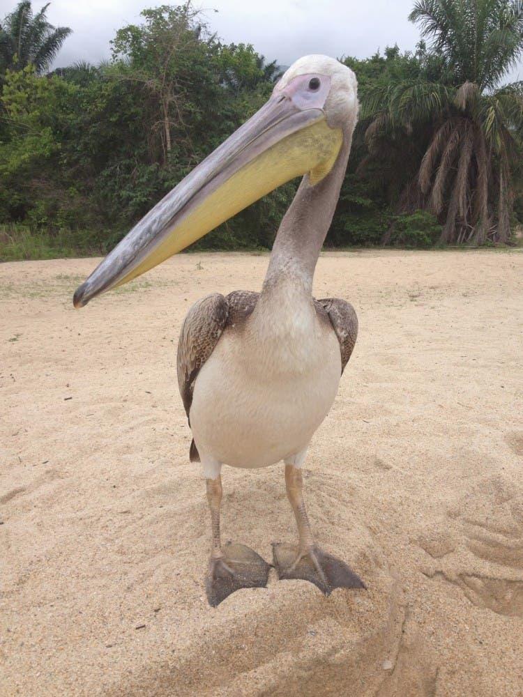 humano-amigo-rescate-pelicano-aprende-pescar-go-pro
