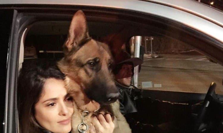 muere-perro-salma-hayek1