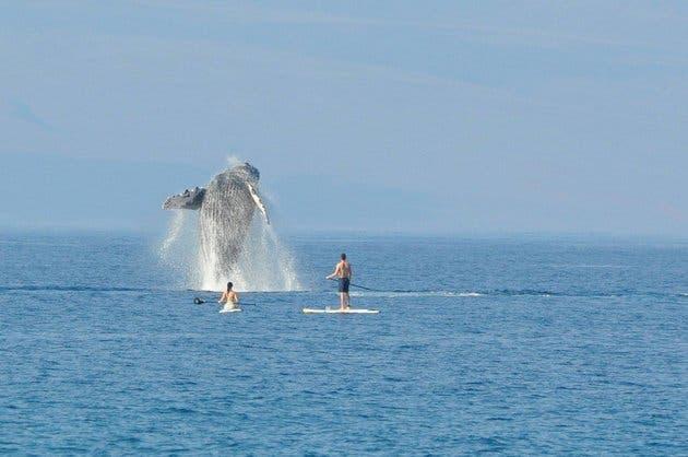 nadando con ballenas 1