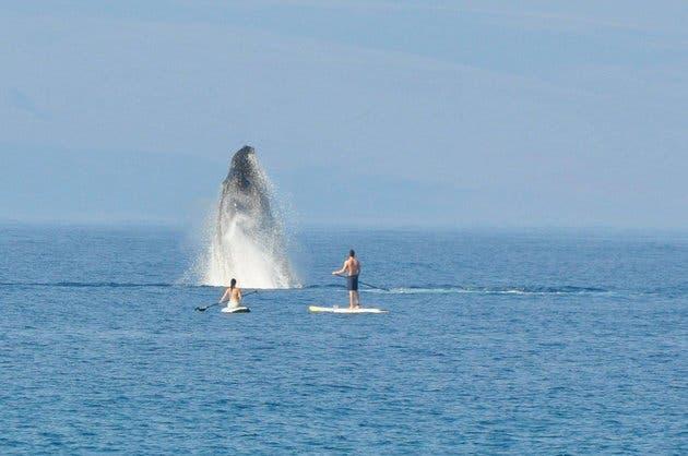 nadando con ballenas 2
