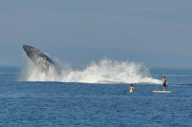 nadando con ballenas 3