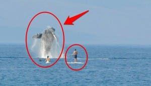 nadando con ballenas 4