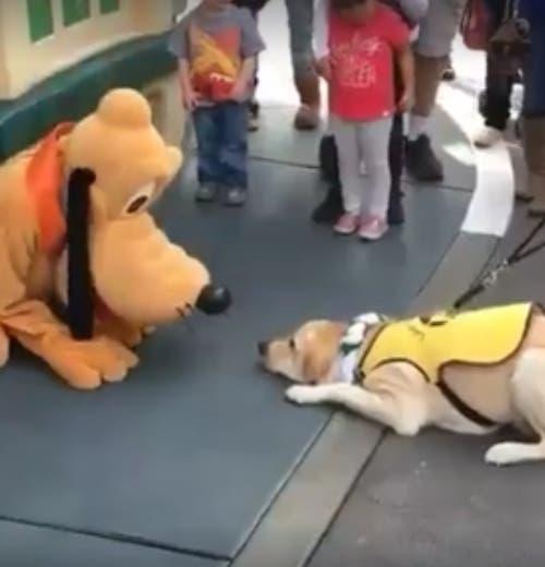 perro-conoce-a-pluto - copia