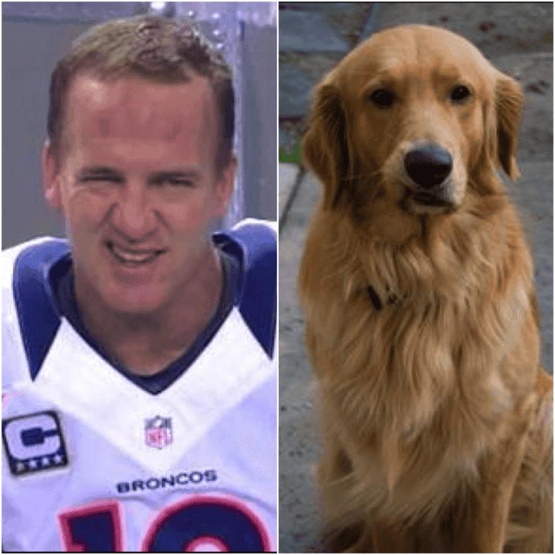 perro peyton manning 11
