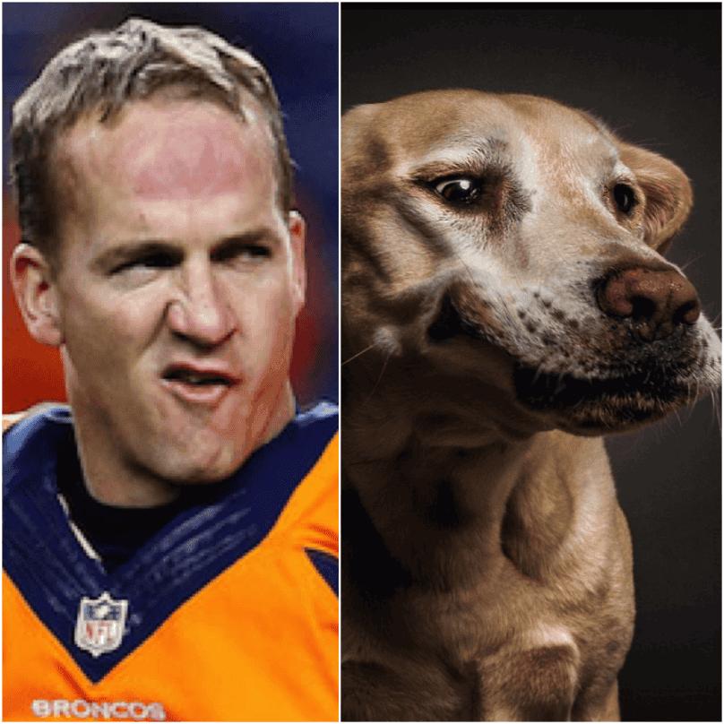 perro peyton manning 7