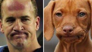 perro peyton manning  id