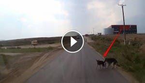perro salva amigo de auto id