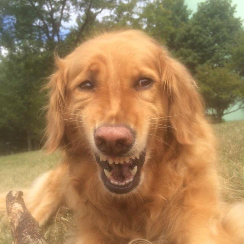 perros graciosos 14