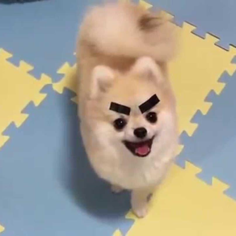 perros graciosos 5
