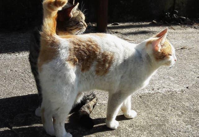 refugio gato silvestre 1