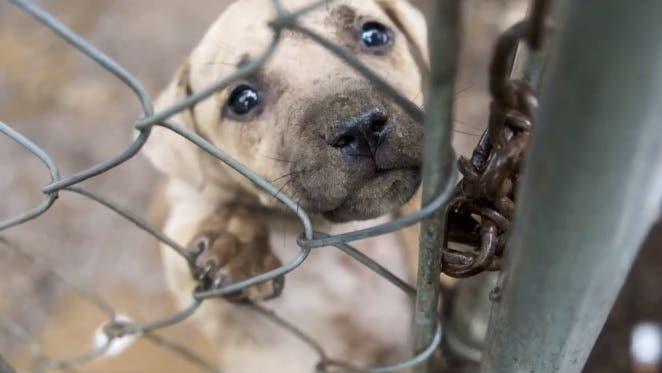 rescate-cachorro