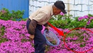 romantico jardin de flores 11