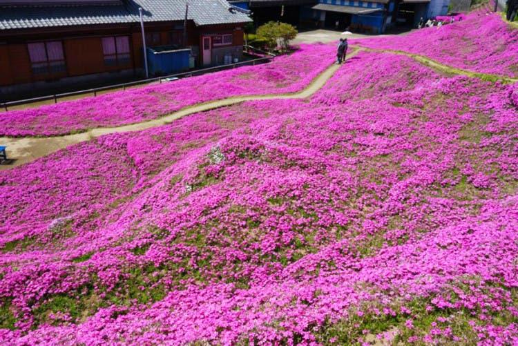 romantico jardin de flores 2