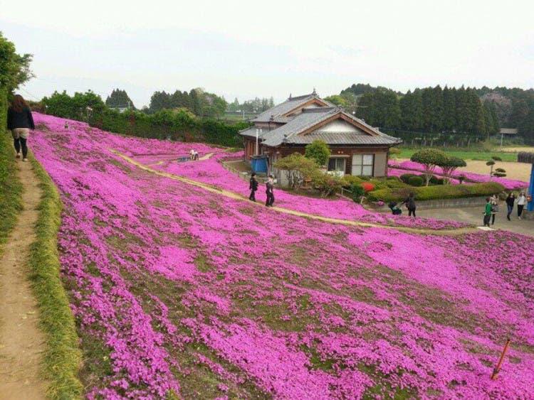 romantico jardin de flores 4