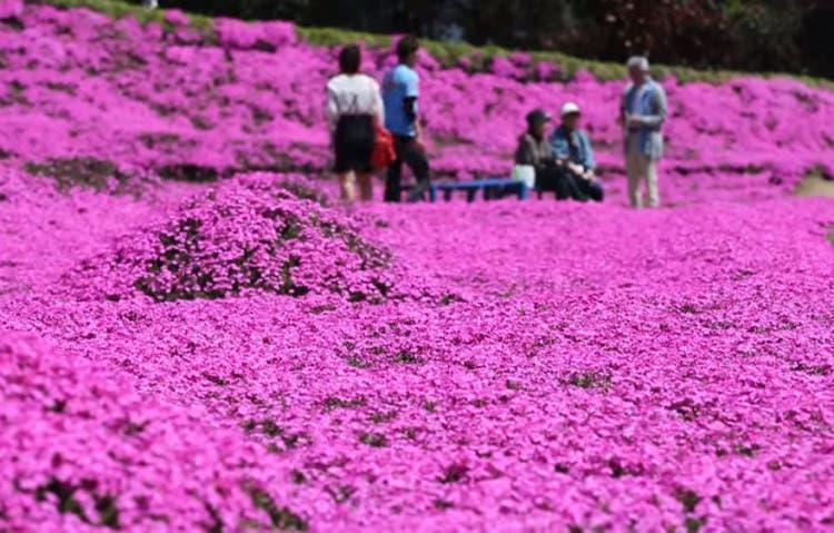 romantico jardin de flores 6