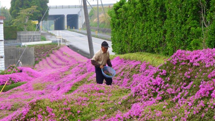 romantico jardin de flores 7