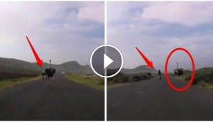 avestruz-persigue-ciclistas - copia