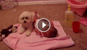 bebe-y-cachorro-vs-aspiradora