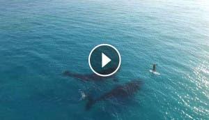 dos-ballenas-y-surfista-3