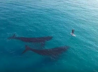 dos-ballenas-y-surfista