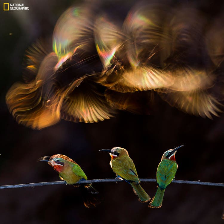 ganadores-concurso-national-geographic-9
