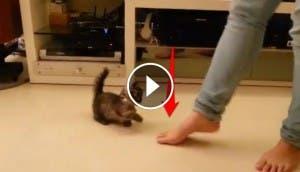 gatito-bailando-con-su-dueno