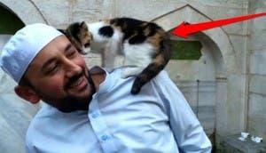 gatos bienvenidos en mezquita 7