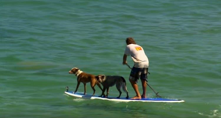 hombre-que-surfea-con-dos-perros1