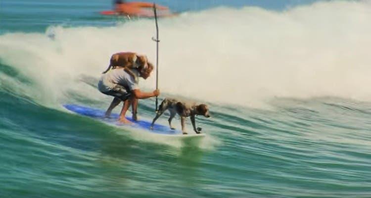 hombre-que-surfea-con-dos-perros3