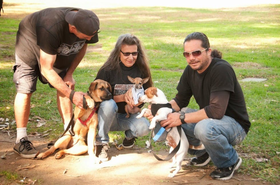 mujer sin hogar ayuda indigentes con perros 10