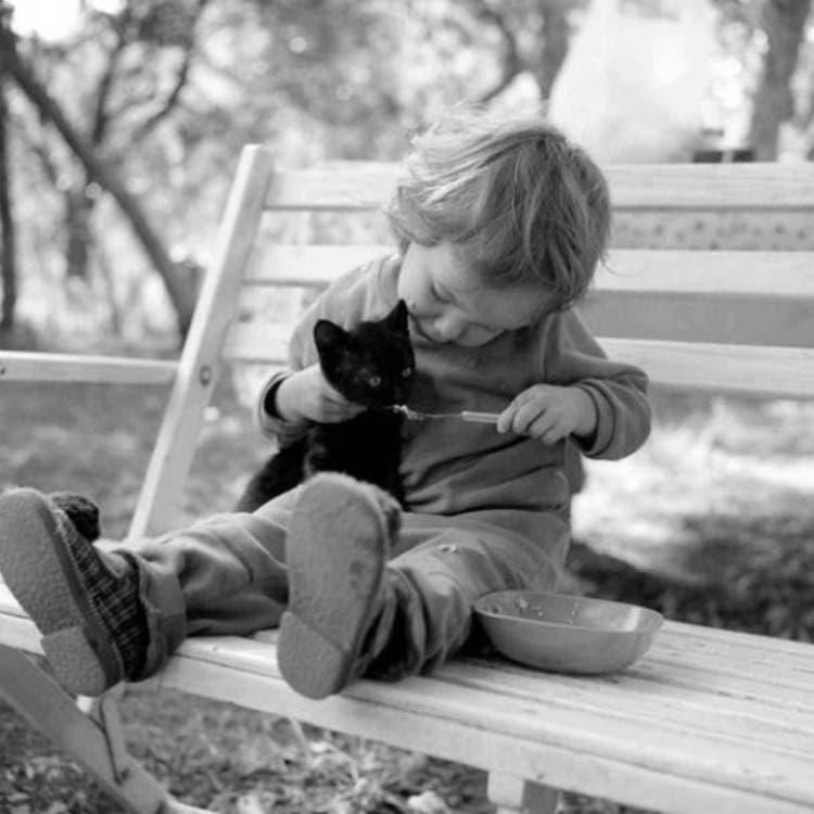 nino-gato