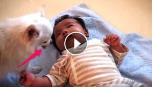 perrito-consuela-bebe-llorando1 - copia
