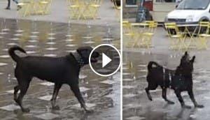 perrito.jugando-en-fuentes-encarna-el-spring-break