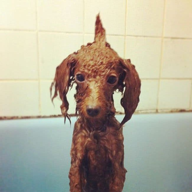 perritos hora del baño 19