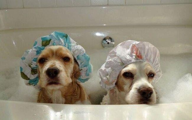 perritos hora del baño 5