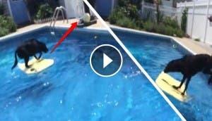 perro-busca-pelota-piscina-sin-mojarse3