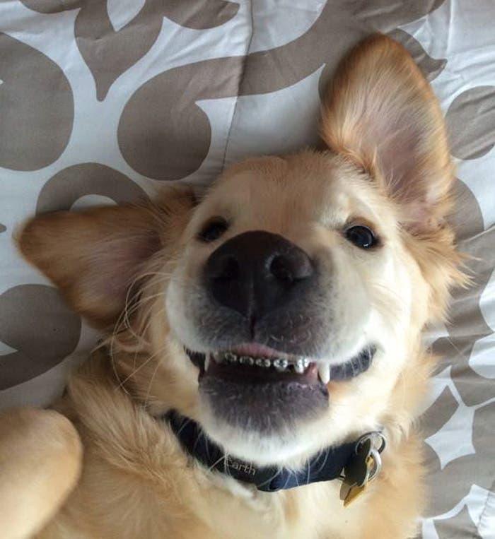 perro con braquets 5