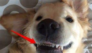perro con braquets 8