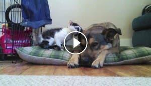 perro-gatito-niño2